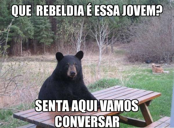 Meme urso rebeldia